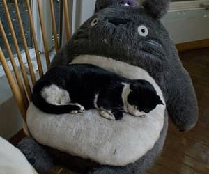 cat, totoro, and animal image