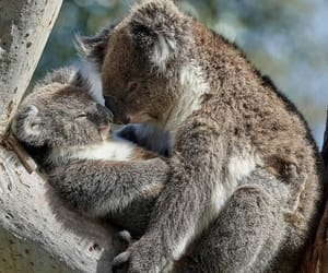 animals, australia, and love image