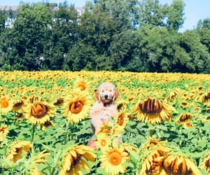 dog, yellow, and flower image