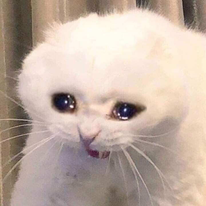 Gatito sad discovered by 𝕾𝖆𝖙𝖆𝖓 🔯 on We Heart It