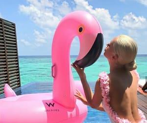 beach, flamingo, and praia image