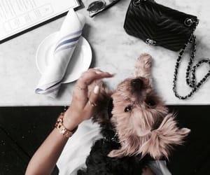 dog, animal, and bag image