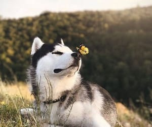 adorable, animals, and beautiful image