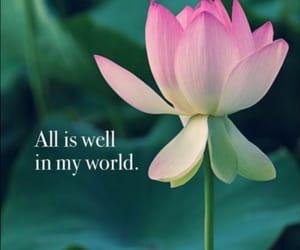 flower, lotus, and world image