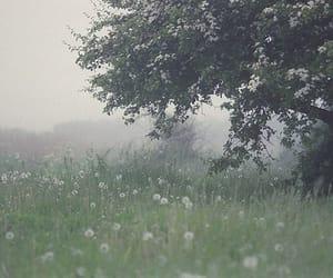 nature, tree, and fog image