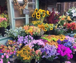 flowers and flower shop image