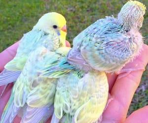 bird, parrot, and rainbow image