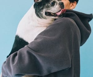 dog, korean, and wallpaper image