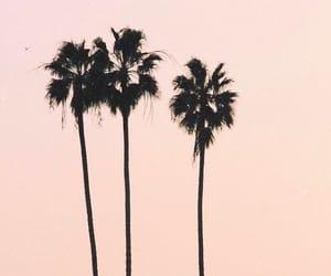 california, palmeras, and good idea image