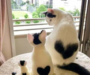 animals, hearts, and kittens image
