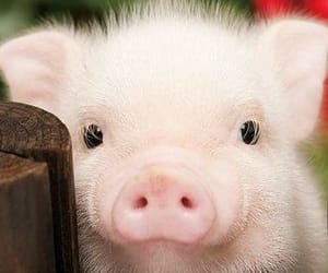 piggy, 🐷, and cute image
