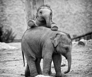 elephant, cute, and baby image