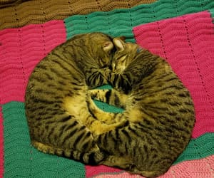 awwwww, cats, and love image