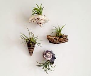 air, diy, and plant image
