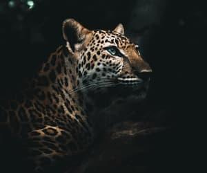 aesthetics, planet, and animals image