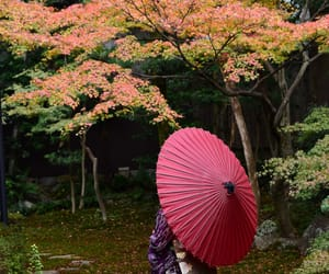 japan, maiko, and kyoto image
