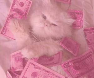 cat, pink, and money image