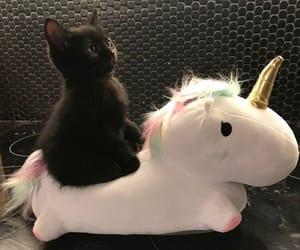cat, unicorn, and cute image