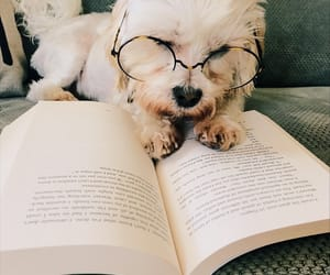 books, dog, and puppy image