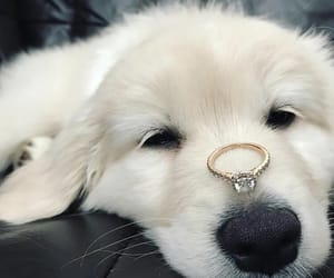 dog, fluffy, and cute image