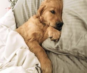 bed, happy, and puppy image