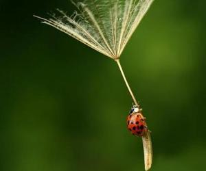 ladybug, nature, and fly image
