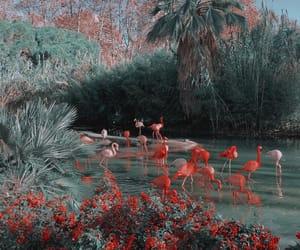 theme, aesthetic, and flamingo image