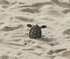 turtle, animal, and sand image