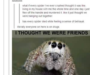 funny, spider, and lol image