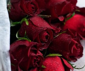 gift, red, and rose image