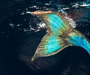 mermaid, tail, and ocean image