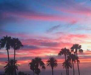 palm and sky image