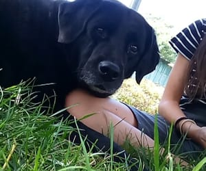 black, dog, and herbe image