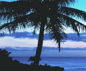 header and palmeras image