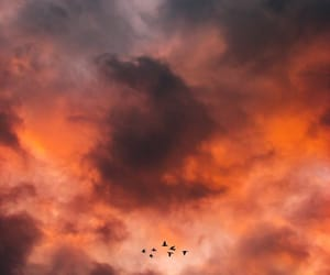 birds, clouds, and orange image