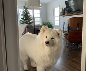 dog and white image