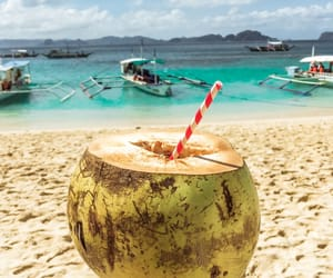 beach, coconut, and Philippines image