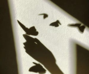 butterfly and shadow image