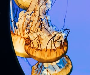 blue, tumblr, and jellyfish image