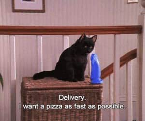cat, pizza, and salem image