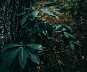 green, inspiration, and nature image