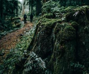 beautiful, green, and inspiration image