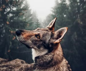 animals, beautiful, and dog image