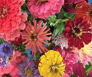 aesthetic, flowers, and colours image