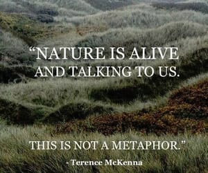 nature and terence mckenna image