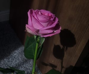 aesthetic, pink rose, and deadroses image