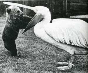 bird, animal, and bear image
