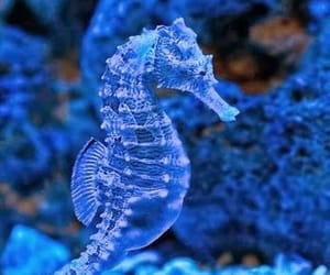blue, fish, and gorgeous image