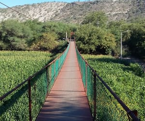green., plants., and puente. image