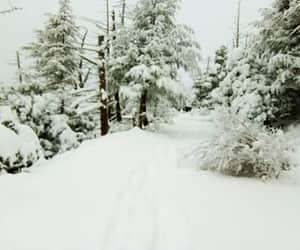 Algeria, cold, and ثلج image